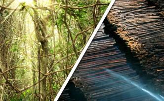 regenwald-abholzung