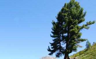 Holz aus den Alpen