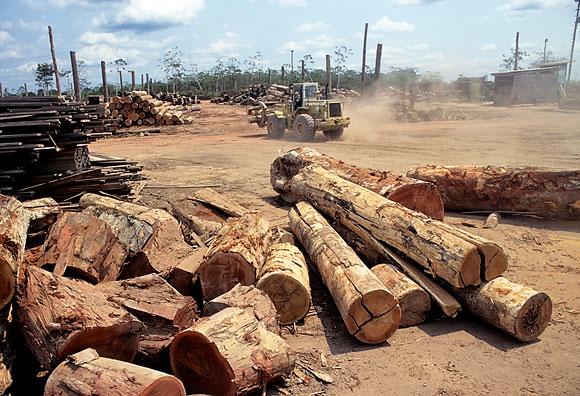 Von nachhaltig keine Spur: Die Abholzung der Regenwälder nimmt gigantische Ausmaße an.