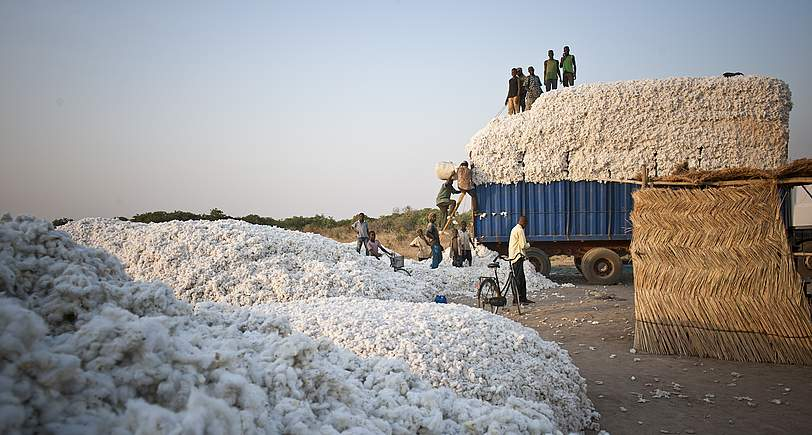 Fair gehandelte und biologisch angebaute Baumwolle nährt die hart arbeitenden Bauern und zerstört nicht die Umwelt. Bild: www.helvetas.ch