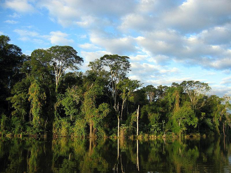 Tropischer Regenwald. Apotheke, Luftreiniger, Wasserspeicher und noch viel mehr. Gier droht ihn zu zerstören. Bild: Wikipedia.