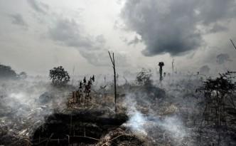 Der Krieg gegen die Regenwälder. Bild: www.diezeit.de