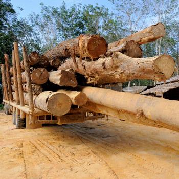 Regenwald Abholzung in Indonesien auf der Insel Sumatra © Fletcher Baylis / WWF Indonesia