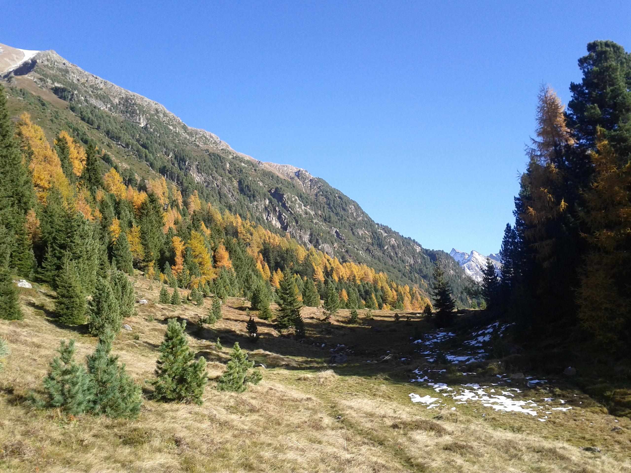 Gesunde Wälder haben eine riesiges Potential, Regenwasser aufzunehmen. Sie sind sozusagen ein natürlicher Hochwasserschutz.