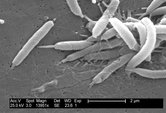 Holz gegen Bakterien. Klingt einfach ist aber wirkungsvoll.