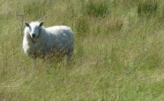 """""""Meine Wolle kriegt nicht jeder - man wirft auch keine Perlen vor die Säue!"""" (Foto: Modlik)"""
