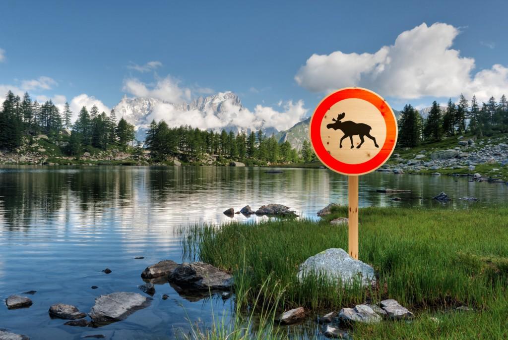 Der schwedische Elch mag kein Zirbenholz.