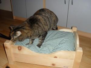 Noch ein wenig skeptisch, was das neue Zirbenbett anbelangt. Aber schon bald wird sie friedlich im gut duftenden Zirbenbett schlummern...