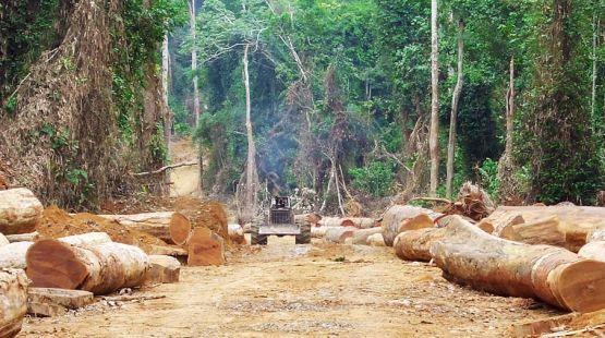 Ein Regenwald im Kongo vor der Zerstörung durch illegalen Holzeinschlag.