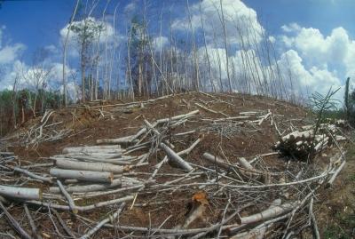 So kann es nicht weiter gehen: Regenwälder werden zerstört um Billigstmöbel verkaufen zu können. Bild: Karl Ammann, Rettet den Regernwald e.V.,