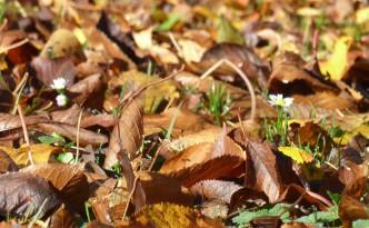 Im Herbst kann eine warme Bettdecke aus schafschurwolle wahre Wunder wirken: www.4betterdays.com